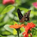 Photos: 蝶の花園
