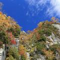 写真: 立山大観峰の紅葉