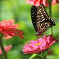 蝶の花周り