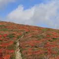 写真: 紅葉盛りの登山道