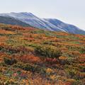 紅葉と初冠雪の月山