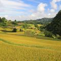 写真: 大蔵村の広大な棚田