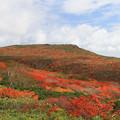 東栗駒山の彩り