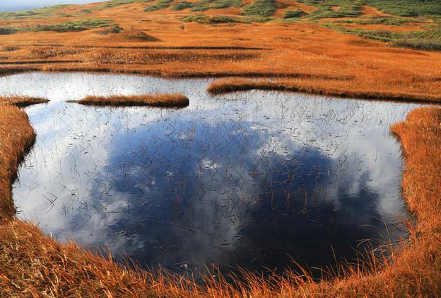 写真: 月山の池塘