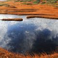 月山の池塘