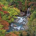 写真: 彩る松川渓谷