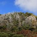 写真: 凍りついた樹木