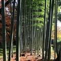 Photos: 味わいの竹林