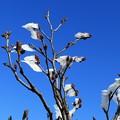 写真: 凍り花