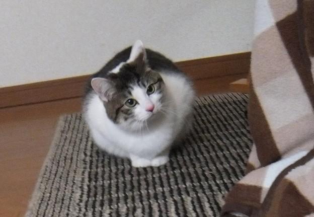 写真: 可愛い猫ちゃん