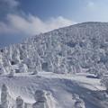 写真: 樹氷百景