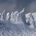 写真: 樹氷集団