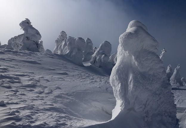 幽寂な中の樹氷群
