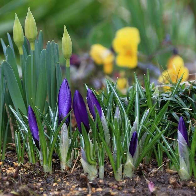写真: 芽生える庭