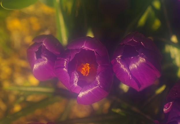 写真: 早春の花咲く