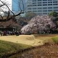Photos: 東京桜紀行