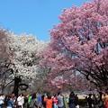 写真: 新宿御苑の花盛り