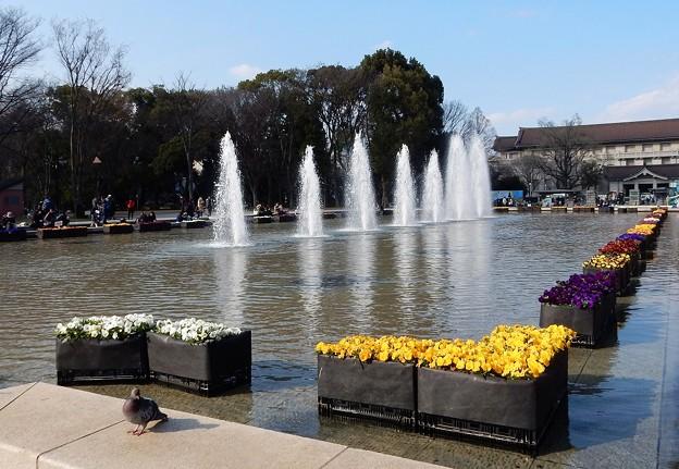 写真: 美しい噴水は春の音