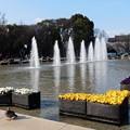 美しい噴水は春の音