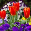 写真: 春庭の彩り