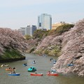 Photos: 千鳥ヶ淵の桜絶景