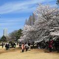 花見日和の新宿御苑