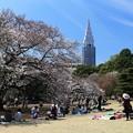 Photos: お花見処の新宿御苑