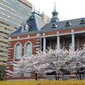 写真: 霞ヶ関桜の季節
