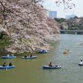 Photos: お花見の休日