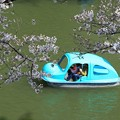 水上自動車のように