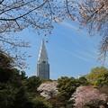 桜と新緑の爽やかさ
