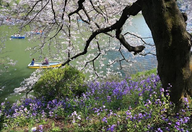 写真: 咲き誇る水辺