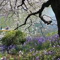 Photos: 咲き誇る水辺