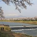 Photos: 白石川の一目千本桜