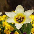 写真: 開いた花びら