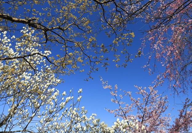 写真: 青空に伸び伸びと