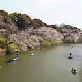 写真: 千鳥ヶ淵の桜の美観