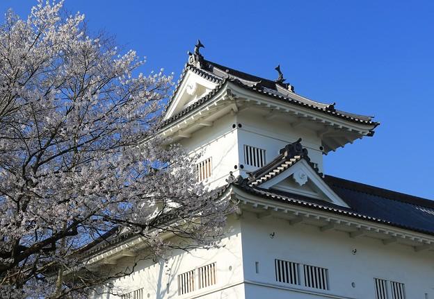 写真: 桜咲く仙台城