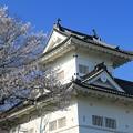 桜咲く仙台城