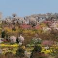 写真: 花盛りの里