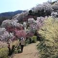 写真: 花々の美々しい小道