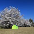 写真: 気になるテント