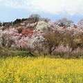 Photos: 春物語