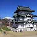 写真: 弘前城桜のころ