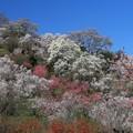 写真: 花もよう