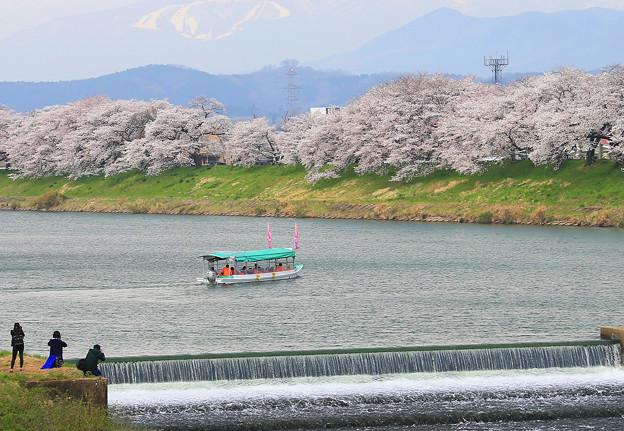 Photos: お花見舟