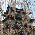 写真: 桜美の天守閣