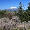 写真: 天守閣からの眺望