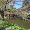 写真: 美風景の弘前公園