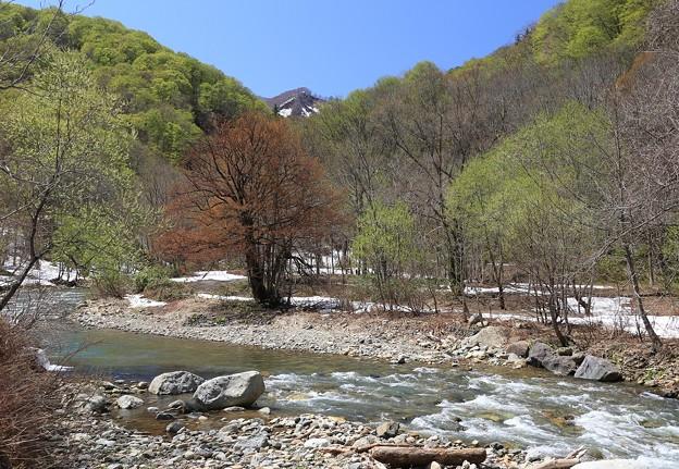 写真: 白神山地の暗門川